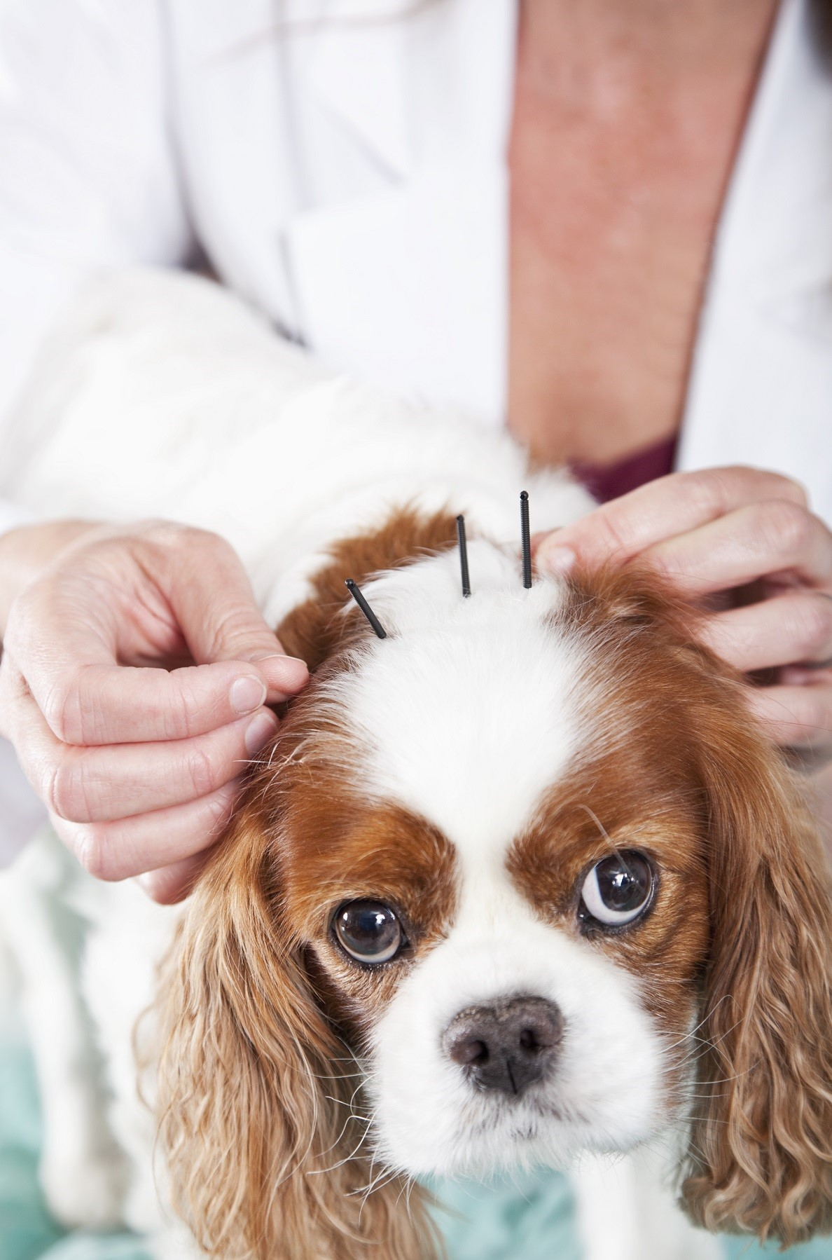 Chinese dog herbal therapy - Please Click Here For A Detailed List Of Conditions That Acupuncture And Chinese Herbal Medicine Can Help To Address